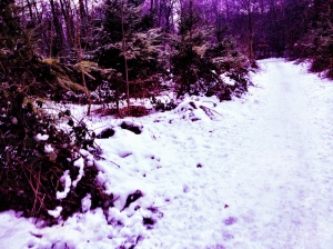 Verschneite Pfade findet man im Stadtwald im Moment häufig.