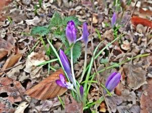 Die ersten Blumen sprießen...