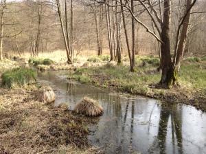 Der Flöthbach wird mehrmals überquert. Er umfließt den Kapuzinerberg.