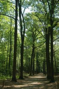 Der Krefelder Forstwald. Foto: Stadt Krefeld, Presse und Kommunikation