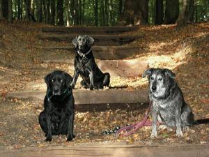 Hunde sind beim SRC2015 wieder erlaubt, wenn sie angeleint, in Menschenmassen ruhig und versichert sind. Auf dem Foto sind Kira rechts, Mathilda und Duke (von rechts) auf der gefürchteten Treppe am Hülser Berg zu sehen. Am Sonntag sind sie jedoch nicht am Start, das Herrchen ist zu faul ;-)